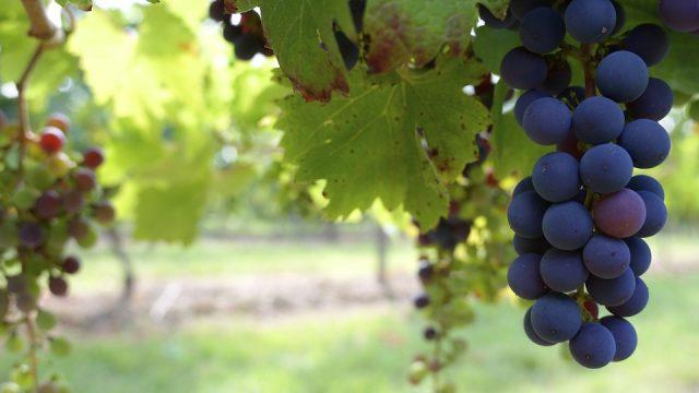 Winery With Vineyards in Ribera del Duero Wine Region for Sale
